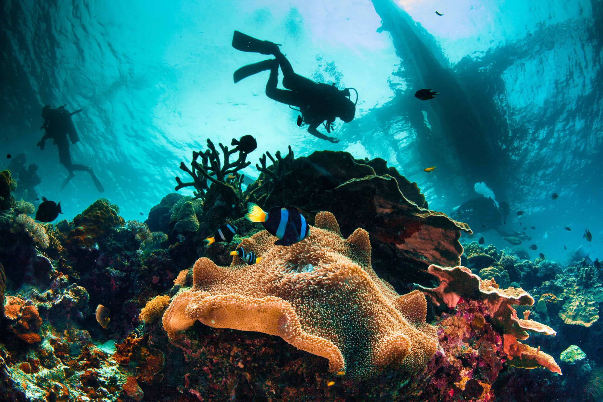 Scuba Diving: The Next Item to Cross off Your List
