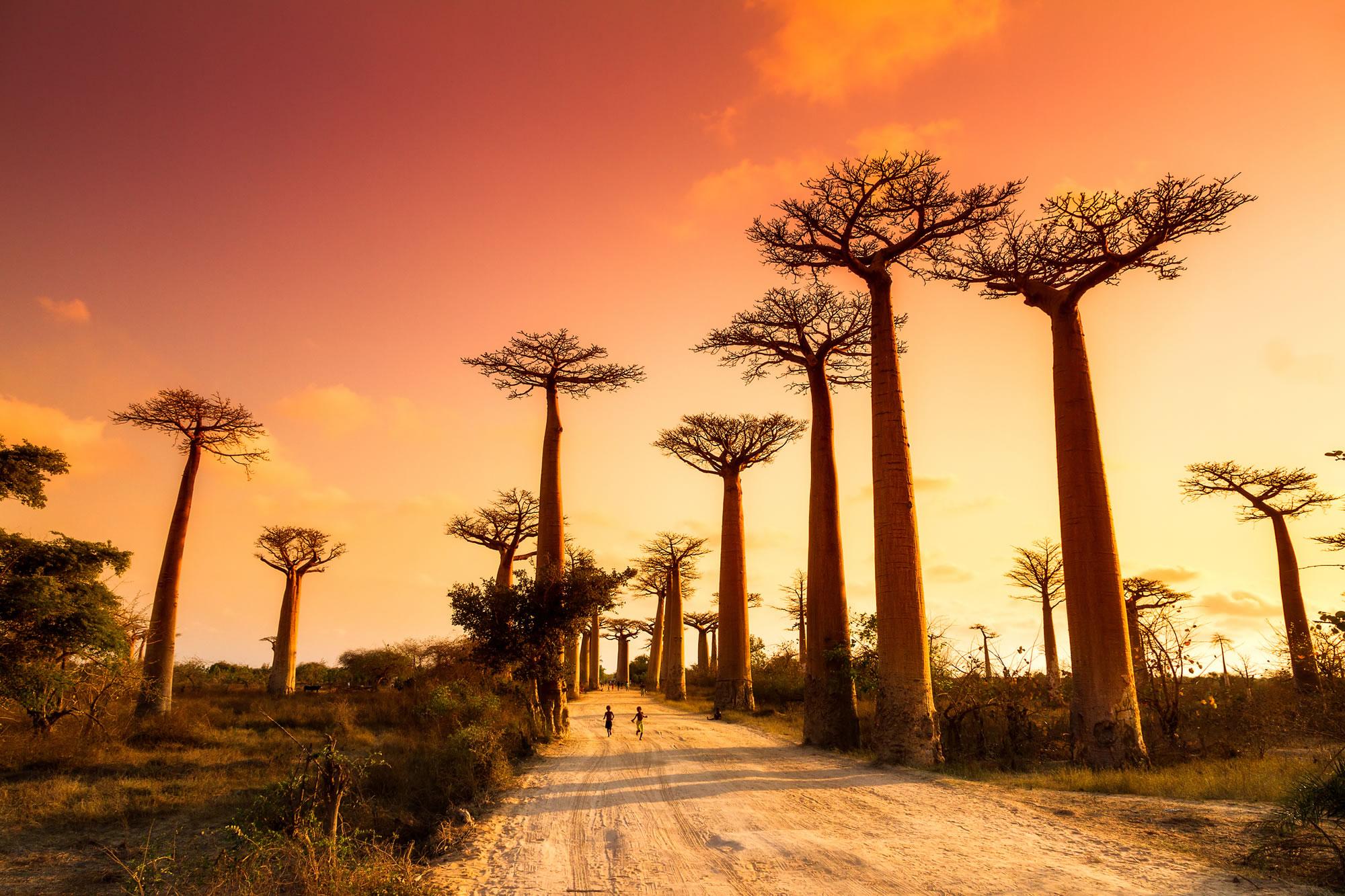 Walk Under Madagascar's Ancient Baobab Trees