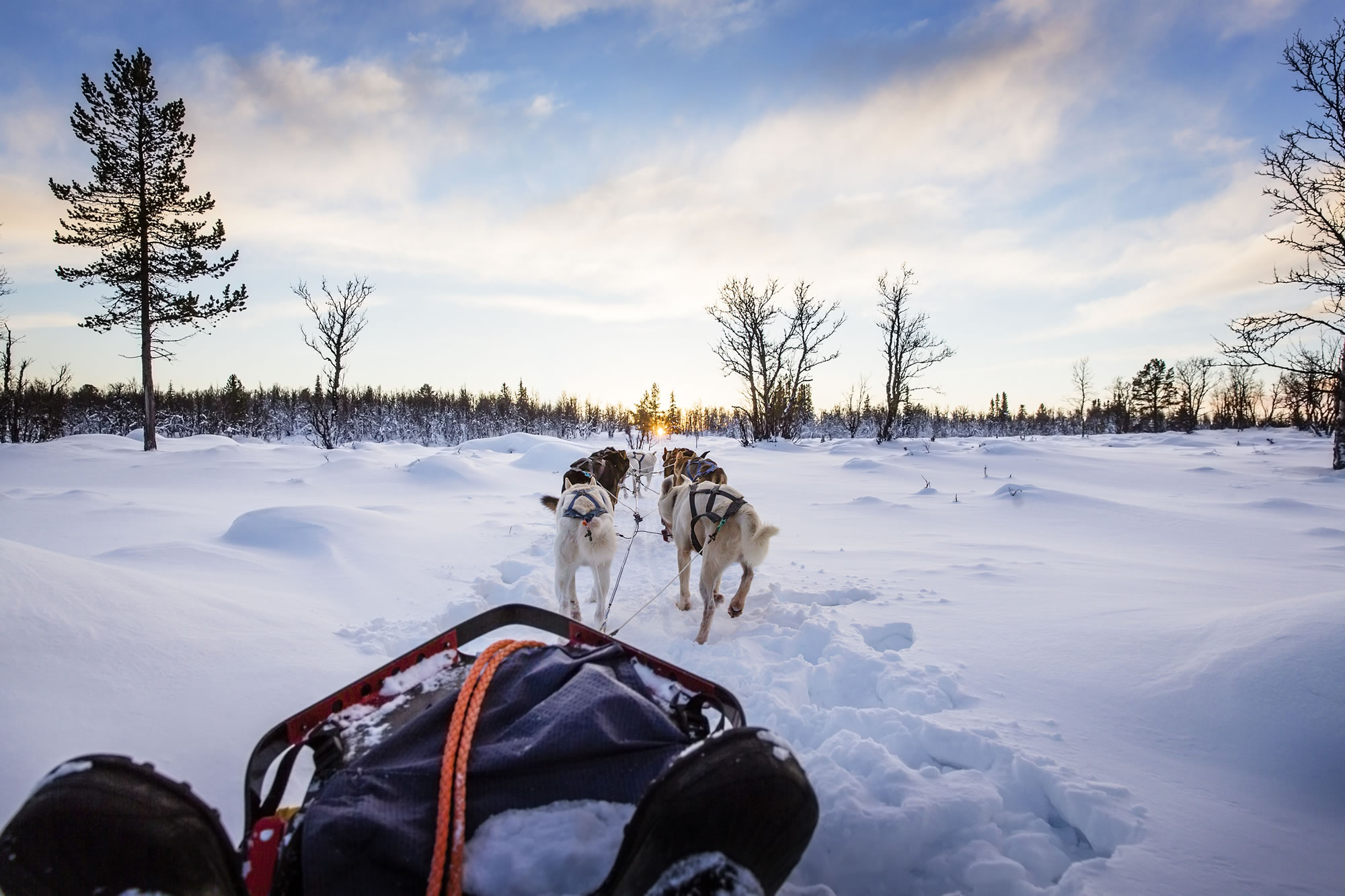 Go Dog Sledding With Huskies