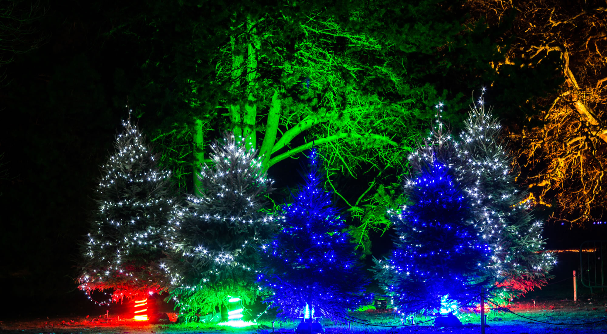 Experience the Magic of Christmas at Kew Gardens