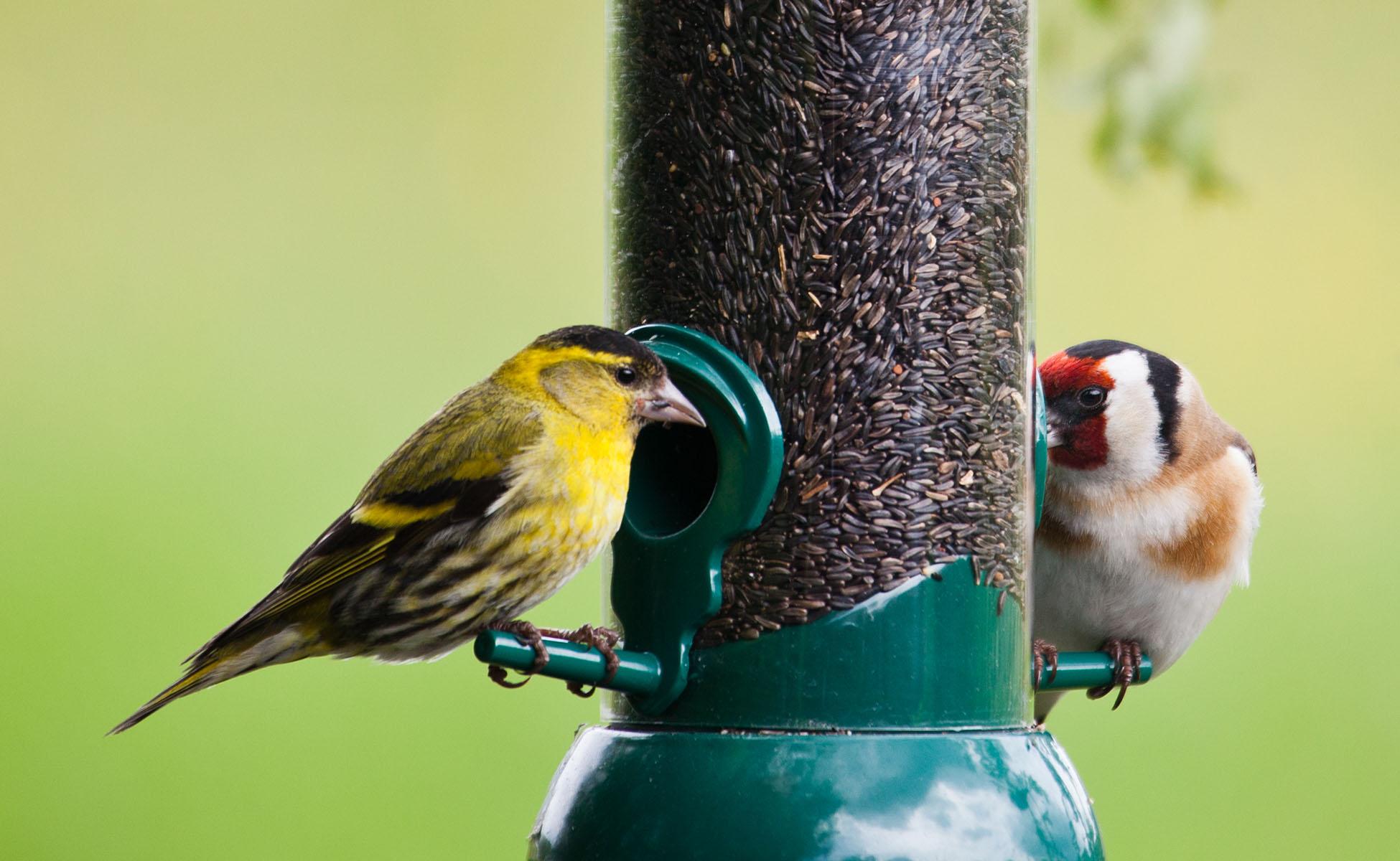 Open A Bird Cafe