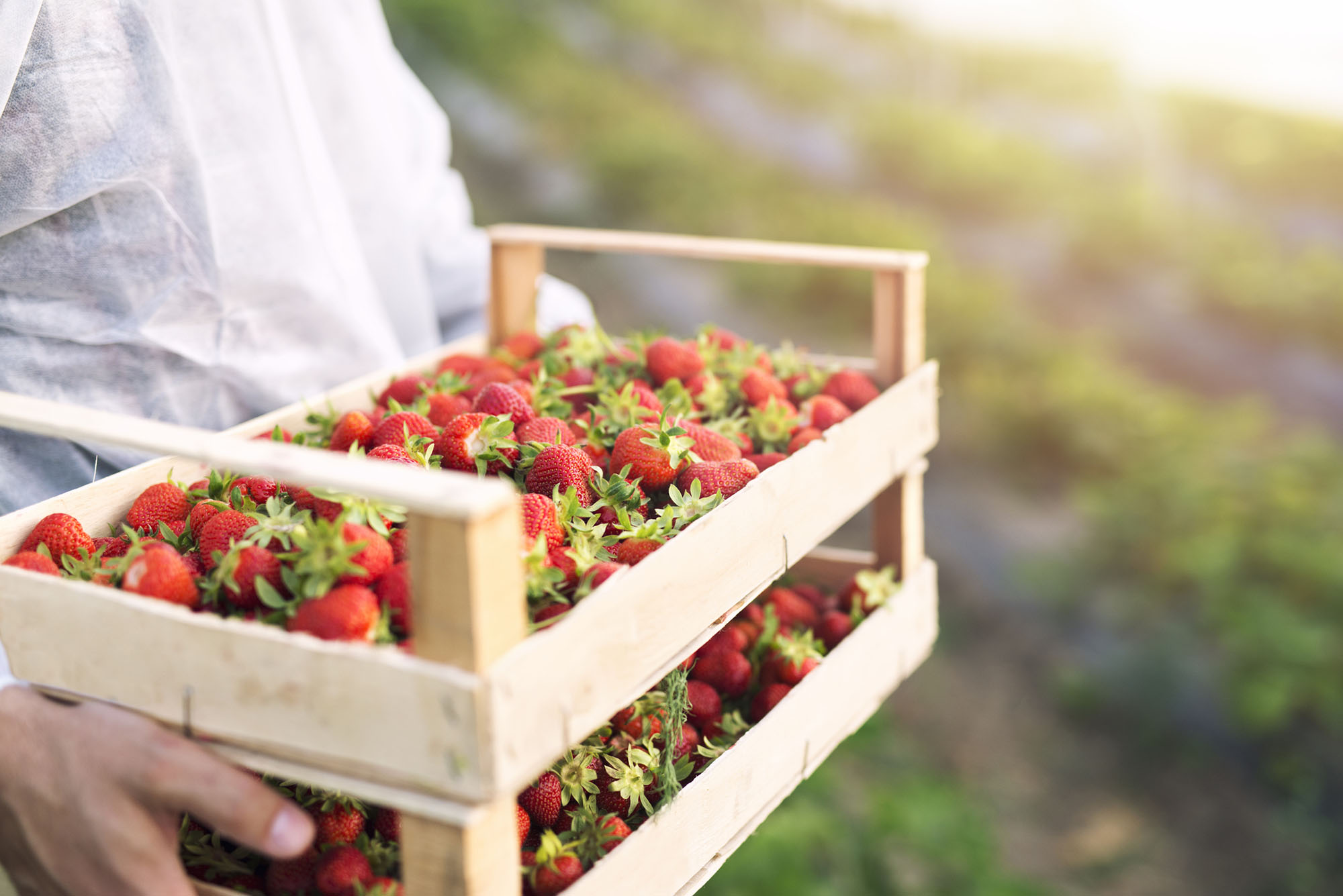 Go Strawberry Picking At A Local Farm