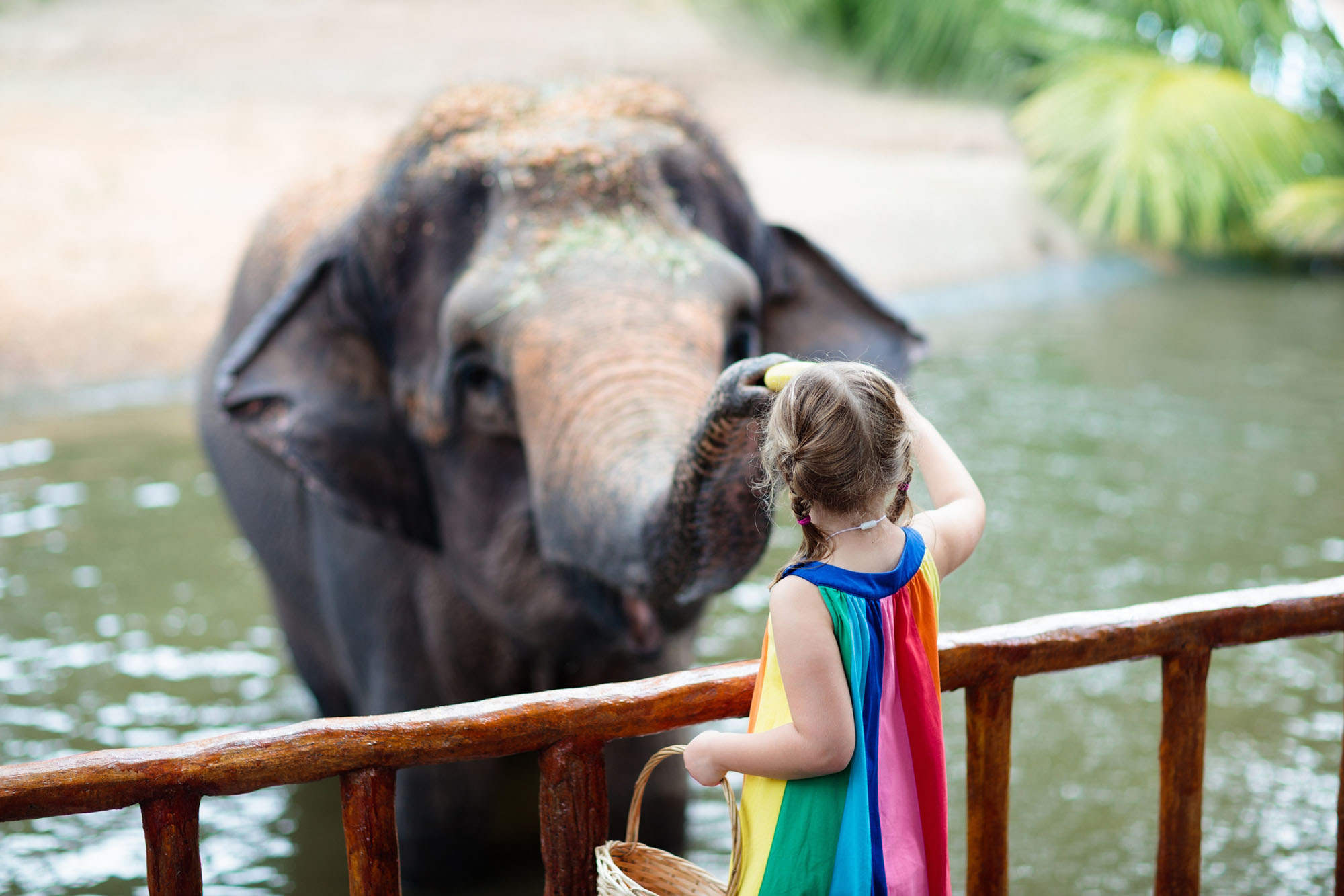 Experience Being A Zoo Keeper For A Day