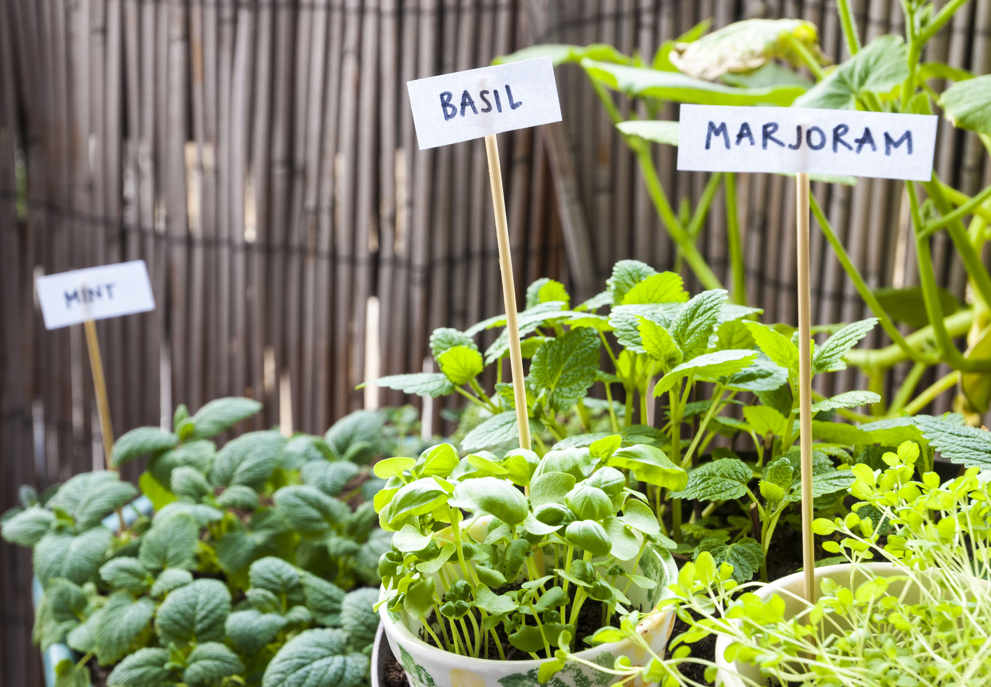 Create Your Own Herb Garden